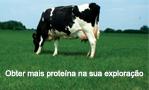Protaplus: Mais e melhor proteína na sua exploração